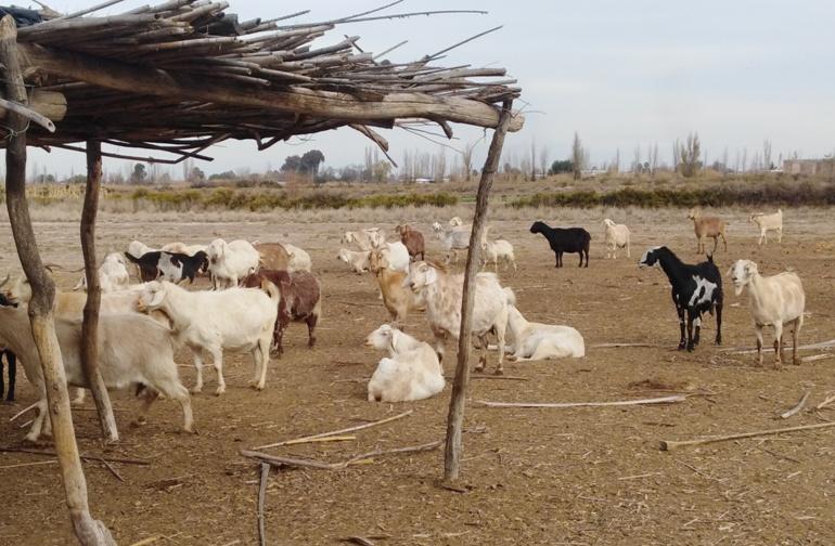 Quesos de Cabra en Mendoza